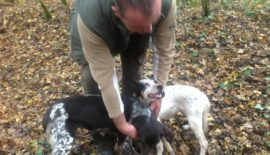 Successful truffle dogs in forest near Motovun, Croatia