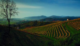 Bizeljska vineyards in Southern Slovenia