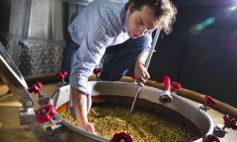 Burja winery